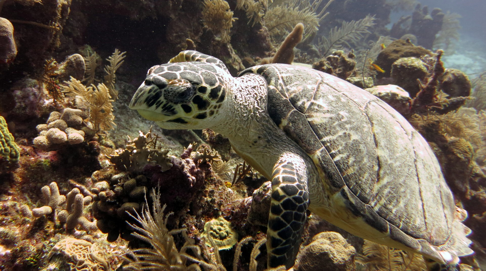 Coral reef Cozumel: Fascinating for divers and snorkelers