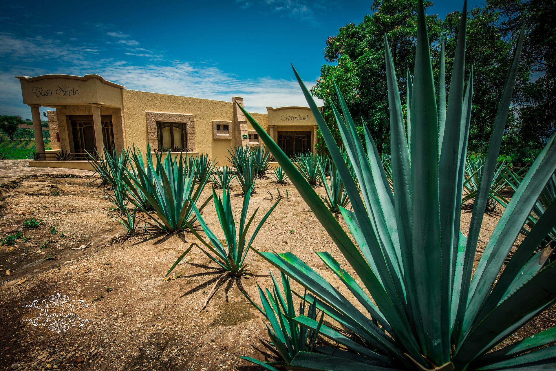 High quality tequila: Recommendations from Mexico