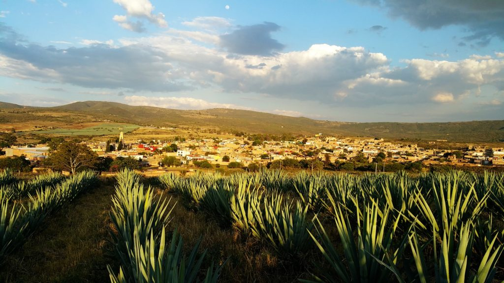Mexico Tequila Agave